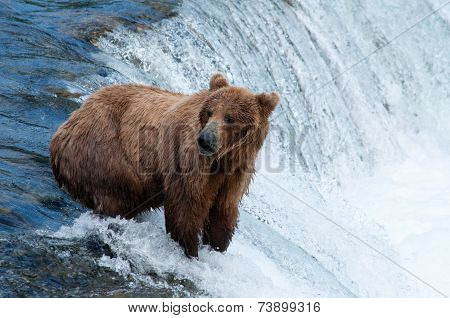 Bear on Falls