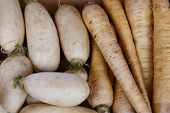 picture of turnips  - pile of raw Turnip from a marketplace - JPG