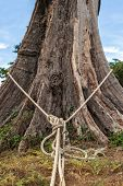 image of hangmans noose  - rope tied around a big tree on the beach - JPG