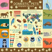 picture of vet  - Domestic pets infographic elements helthcare vet - JPG