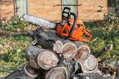 picture of walnut-tree  - The orange chainsaw lying on firewood outdoors - JPG