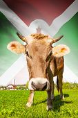pic of burundi  - Cow with flag on background series  - JPG