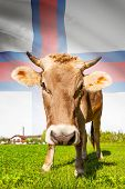 pic of faroe islands  - Cow with flag on background series  - JPG