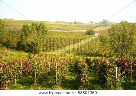 Harvest in October Oltrepo Pavese
