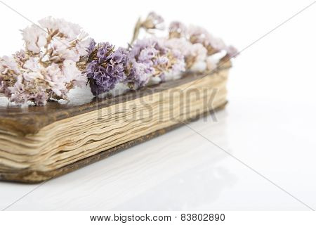 Dried violet flowers on old book