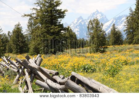 Wildflowers at Grand Tetons