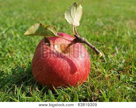 apple in the grass in autumn, southern Bohemia, Czech Republic