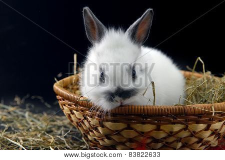 Small Rabbit In Basket