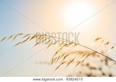 Pampas With Sun And Sky In The Background