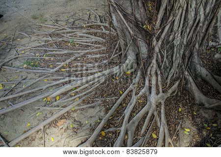 tree old ages root branches ground concepttree old ages root branches ground concept
