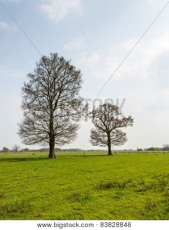 Two Budding Trees In The Spring Season