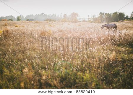 Horse At Countryside