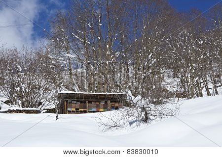 Gotthard Massif (switzerland) - Beehives At Snow