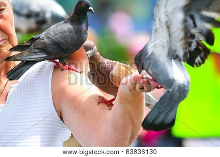 Pigeons On Arm Of Woman