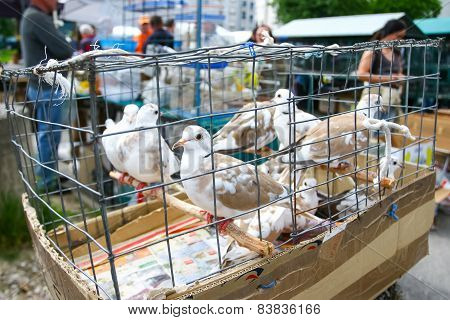 Pigeons In Cage On Market