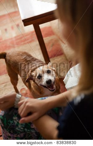 Cheerful Dog Indoors