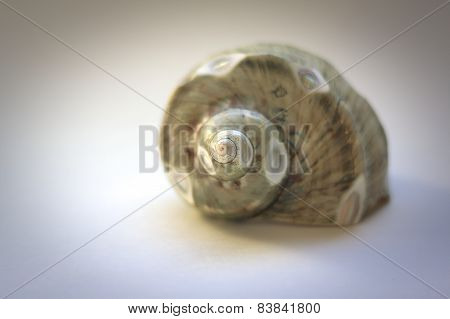 Sea Shell with soft selected Focus