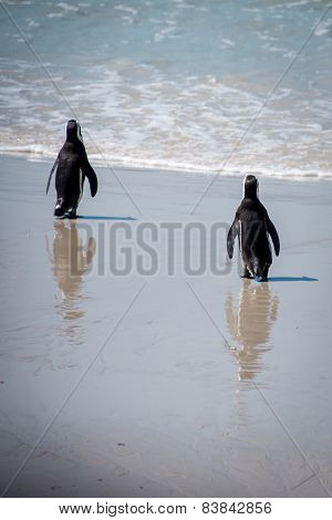 Walking Penguins