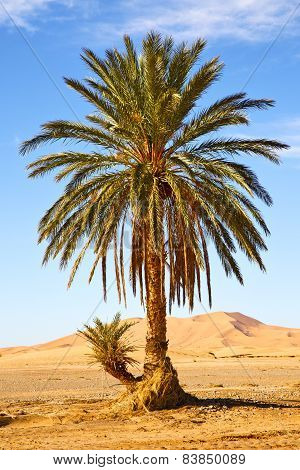 Palm In The