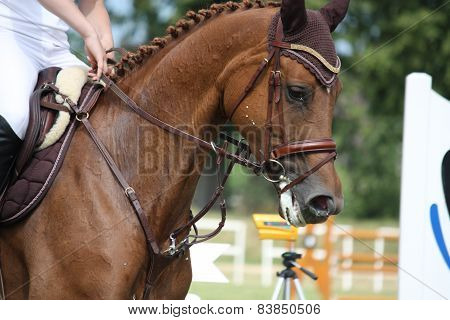 Brown Horse Portrait During Competition
