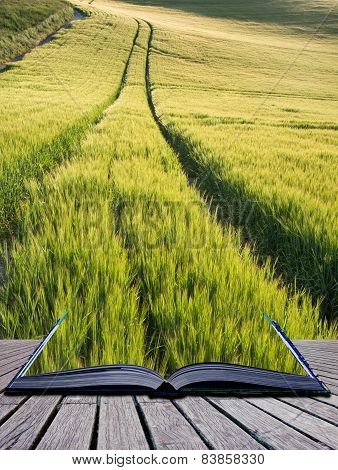Beautiful Landscape Wheat Field In Bright Summer Sunlight Evening Conceptual Book Image