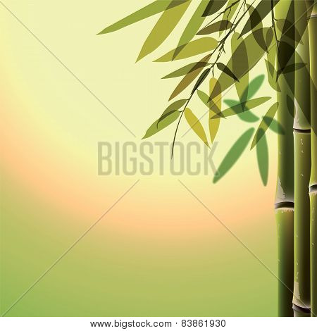 Bamboo trees and leaves at sunset time.