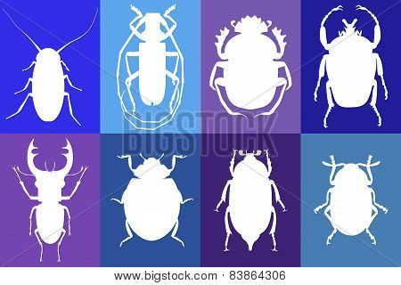 Templates Of Beetles