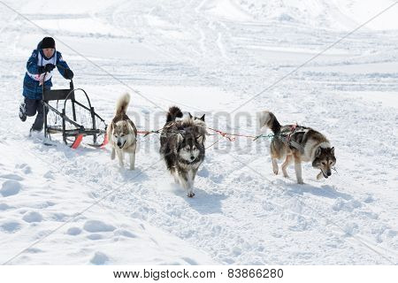 Kamchatka Kids Sled Dog Race
