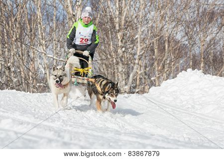 Kamchatka Kids Dog Sledge Racing