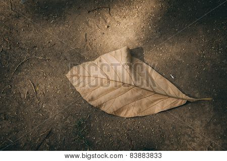 Dry Leaf On Dry Soil