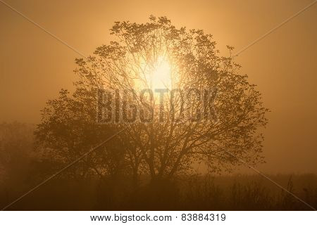 Sunlight Through The Branches Of A Lone Tree