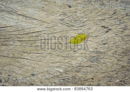 Leaf On Old Wood Background