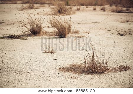 Dry Weed On Dry Land