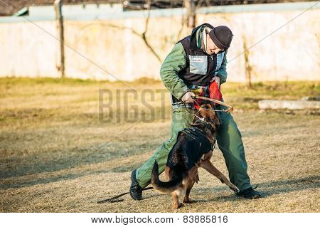 German Shepherd Dog training