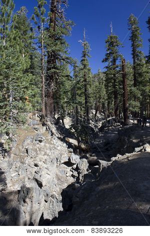 Mammoth Lakes In California, trees and nature