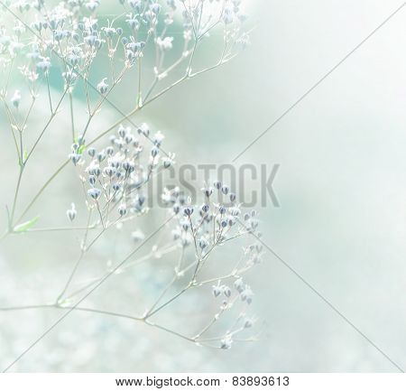 Pastel toned flowers