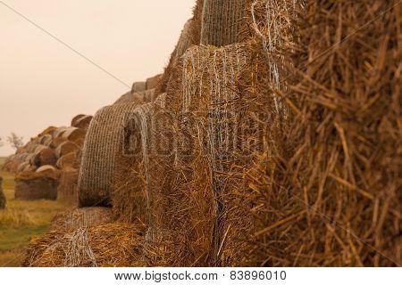 Straw nature