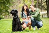 image of schnauzer  - Young attractive girl crouches in the park with her boyfriend next to the dog a black giant schnauzer - JPG