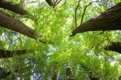 pic of coniferous forest  - Fish - JPG