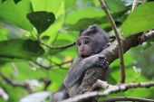 stock photo of baby-monkey  - Beautiful baby monkey playing in the trees (Indonesia Asia) ** Note: Visible grain at 100%, best at smaller sizes - JPG