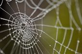 foto of cobweb  - water droplets on the spider - JPG