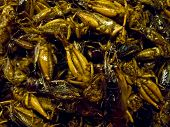 pic of insect  - Crispy fried insects  are regional delicacies in many Asian countries like Thailand - JPG
