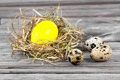 image of quail egg  - Easter Egg in nests and quail eggs on wooden background - JPG