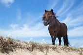 foto of pony  - Black pony standing on sand with blue sky - JPG