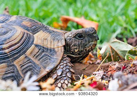 tortoise in garden