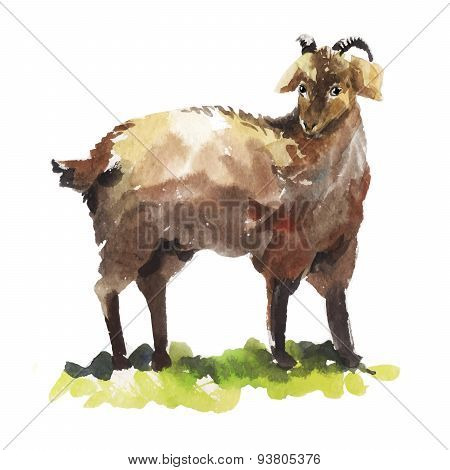Watercolor illustration of a brown goat. Hand-drawn vector sketch.