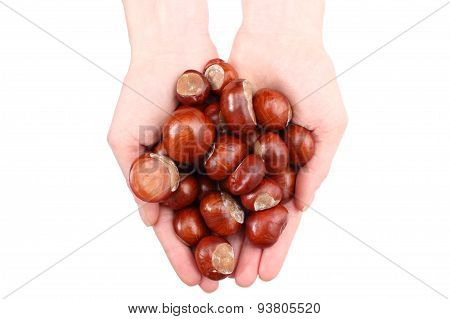 Hand Of Woman With Chestnut With White Background