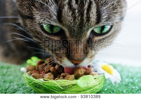 Cat eating