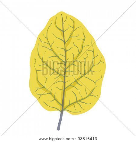 Autumn leaf of tree, isolated on white, vector illustration
