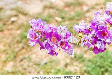 Cananga Odorata Flowers, Thai Flower Tabak